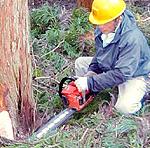 安全確認を第一に、より良い木材を生み出すことにいつも全力であたるという。